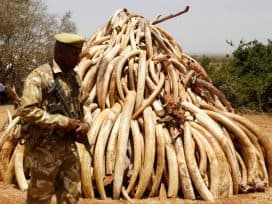 A STEELIER MESSAGE OFF THE US ON ELEPHANT POACHING